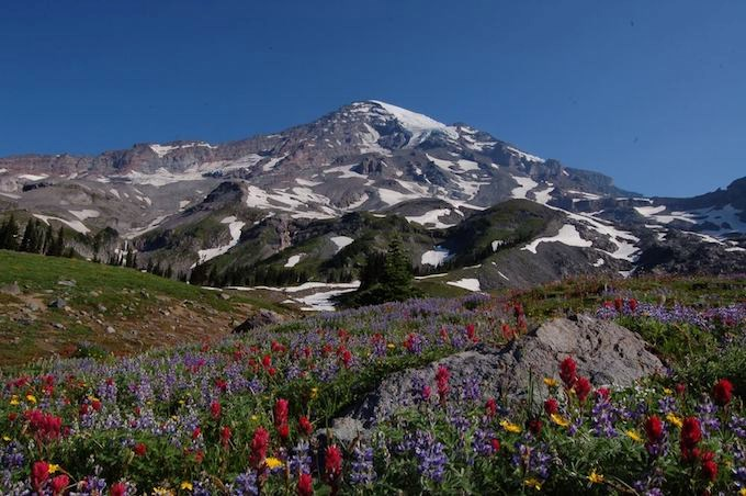 Wildflowers and Mt. Rainier during the summer season seen from Upper Van Trump Park, photo courtesy of NPS/Sarah Pigeon