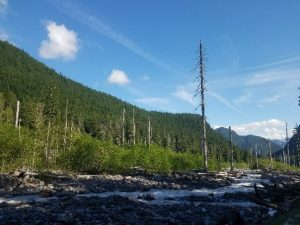 Tahoma Creek from Westside Road, photo by self