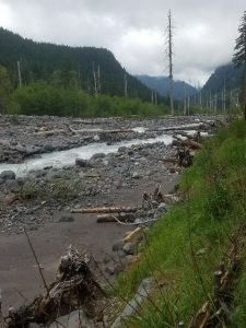 Root wad used to stabilize Westside Road along Tahoma Creek, photo by self