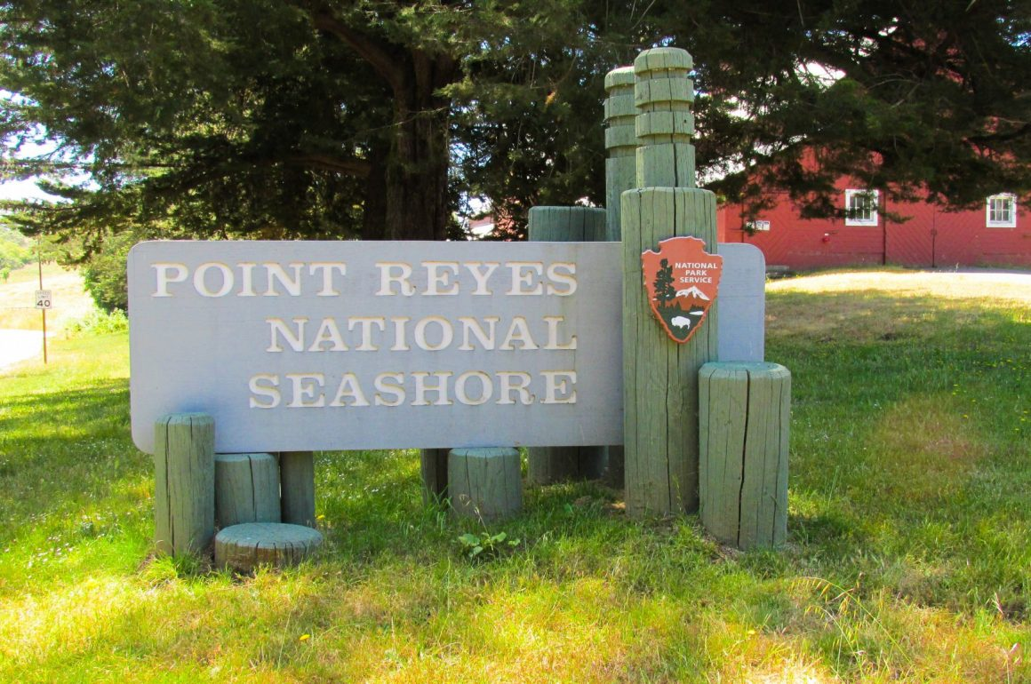 First Impressions: Week 1 at Point Reyes National Seashore