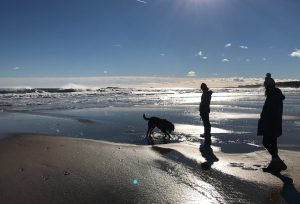 Friends and dogs at Scarborough Beach, Maine.