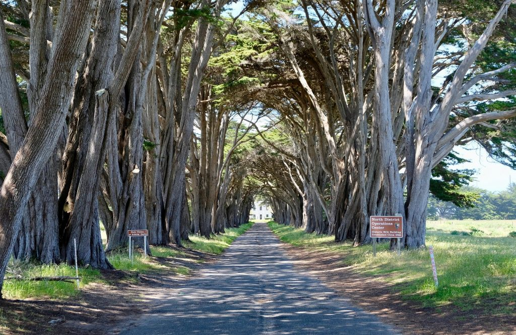 Cyprus tree tunnel