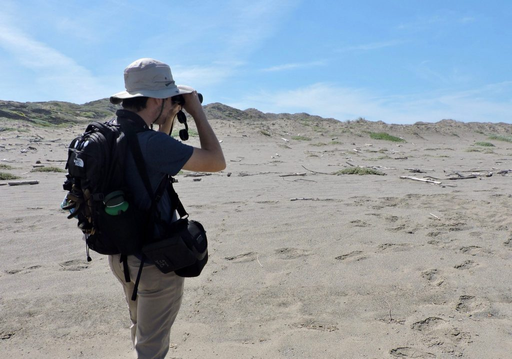 Diego Morales surveying for Western Snowy Plover