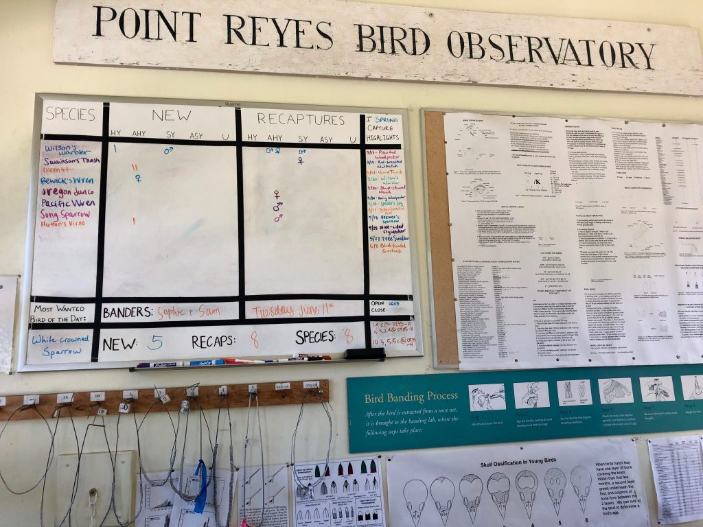 Point Reyes Bird Observatory with a board of the species caught and banded by interns