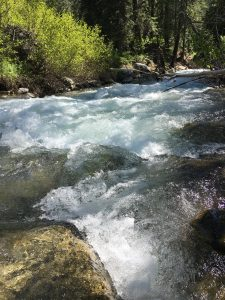 one of the rapid rivers in Sequoia National Park