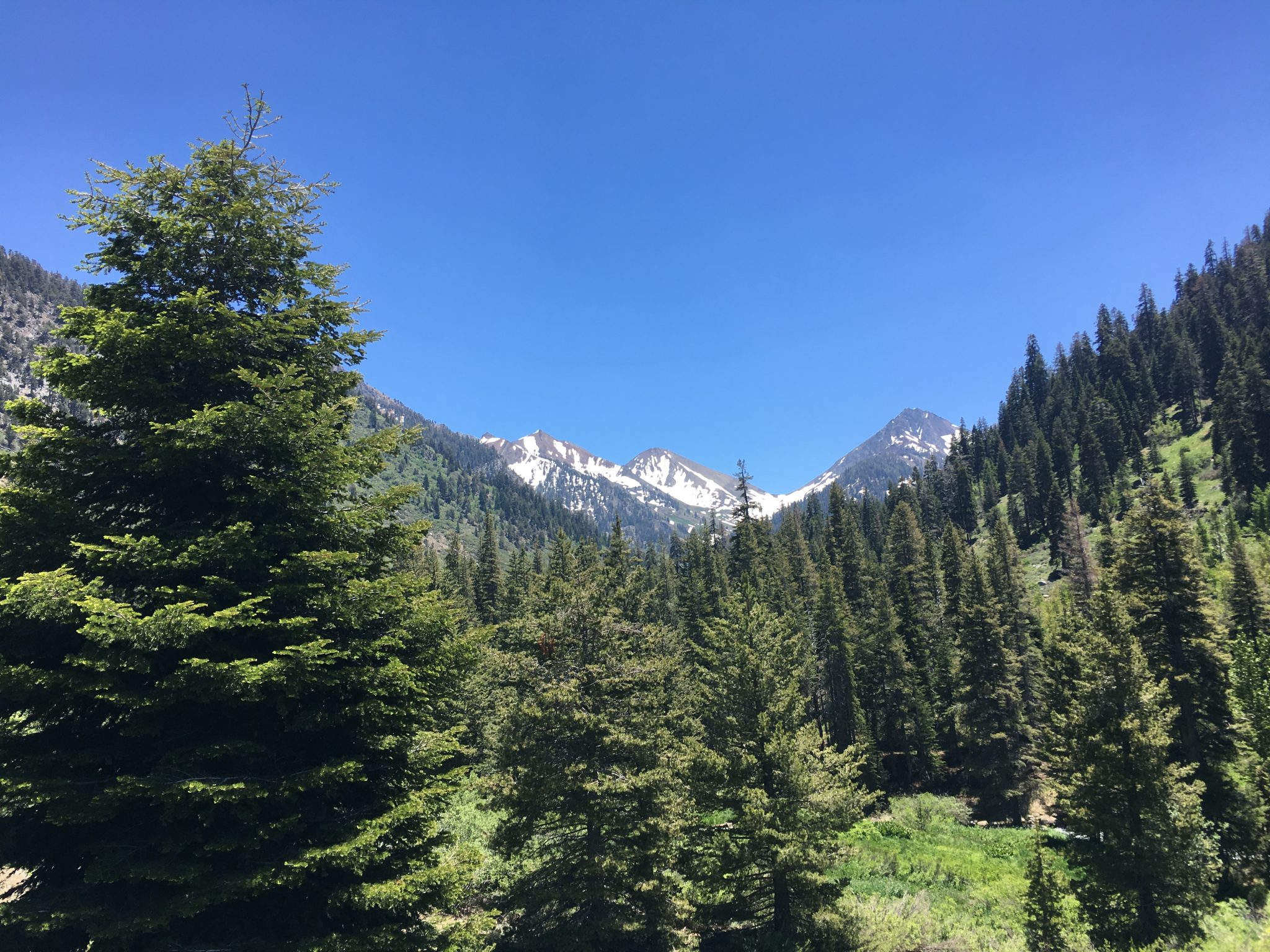 View of the Mountains in Sequoia National Park