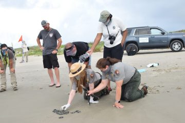 Amani Canada audio records a hatchling release with Nick Meyer, Dr. Donna Shaver, and Cynthia Rubio (left to right).