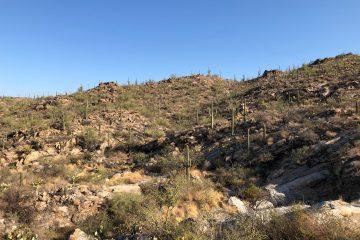 Sonoran Desert Landscape