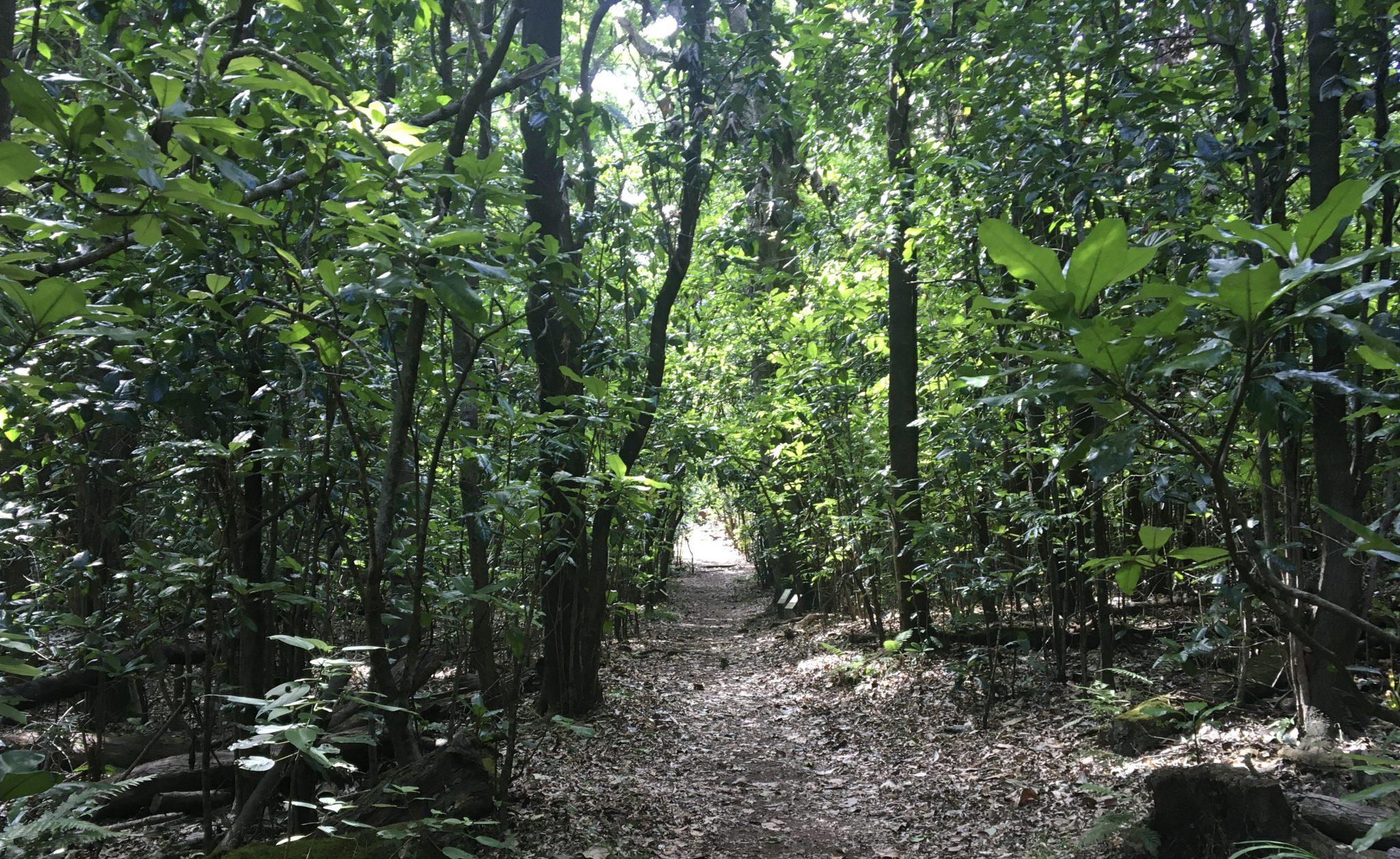 A rainforest trail
